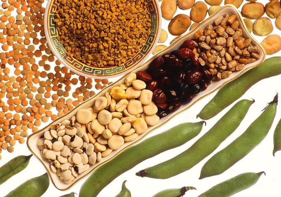 Хранителната стойност на бобовите култури